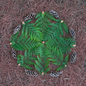 Geometry of Ferns