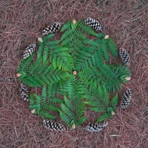 Geometry of Ferns
